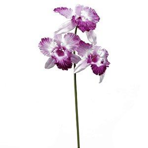Galho De Orquídea Catléia