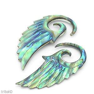 Espiral Abalone Asa