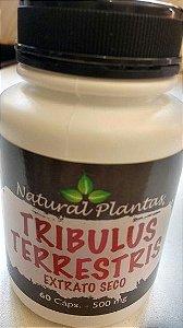 Tribulus Terrestris 500mg (60 Cáps) - Natural Plantas