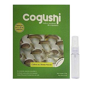 Kit Cultivo Cogumelo Shimeji Branco