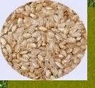 Arroz integral cateto à granel 500 grs