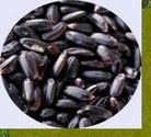 Arroz negro à granel 500 grs