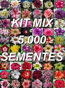 Kit com 5.000 sementes de cores de flor simples da Rosa do Deserto