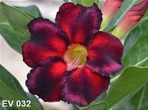 Enxerto de uma cor com flor Simples - EV032