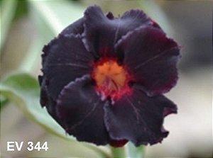 Enxerto de uma cor com flor Dobrada - EV344