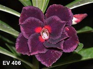 Enxerto de uma cor com flor Dobrada - EV406