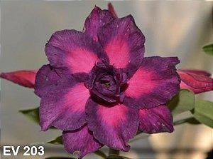 Enxerto de uma cor com flor Tripla - EV203