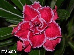 Enxerto de uma cor com flor Tripla - EV409