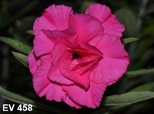 Enxerto de uma cor com flor Tripla - EV458
