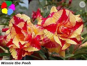 Flor Tripla - Kit com 3 sementes - Winnie the Pooh - Chang Ping
