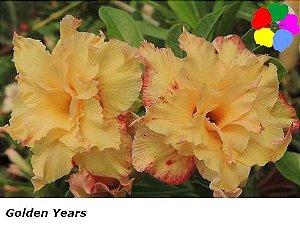 Flor Tripla - Kit com 3 sementes - Golden Years - Chang Ping