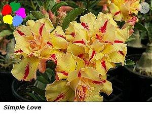Flor Tripla - Kit com 3 sementes - Simple Love - Chang Ping