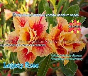 Enxerto de uma cor com flor dobrada - Legacy Rose (Importada)