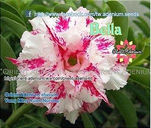 Enxerto de uma cor com flor Tripla - Bella (Importada)