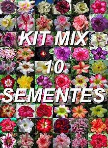 Kit com 10 sementes de cores de flor simples da Rosa do Deserto