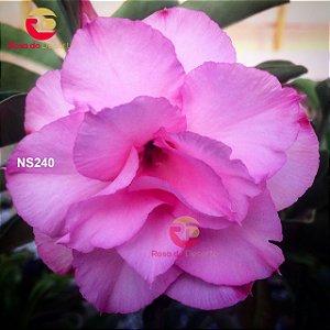 Enxerto de uma cor com flor Trilpa - NS240