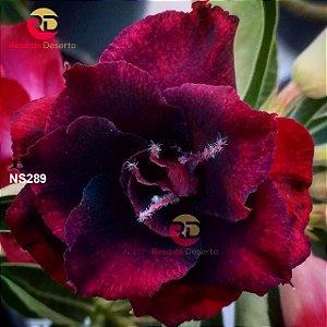 Enxerto de uma cor com flor Dobrada - Steel