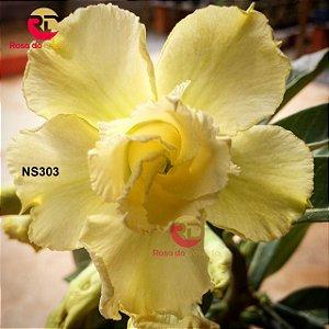 Enxerto de uma cor com flor Dobrada - NS303 (Golden Wish)