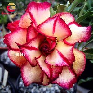Enxerto de uma cor com flor Tripla - NS253