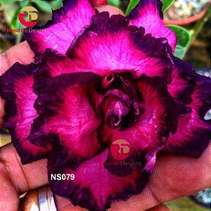 Enxerto de uma cor com flor Tripla - NS079