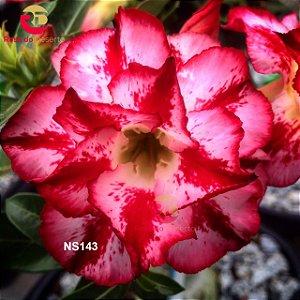 Enxerto de uma cor com flor Dobrada - NS143