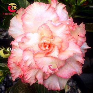 Enxerto de uma cor com flor Quádrupla - NS140 (Coral Angel)
