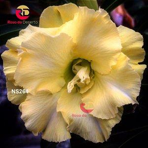Enxerto de uma cor com flor Dobradas - NS264