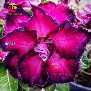 Enxerto de uma cor com flor Triplas - NS045