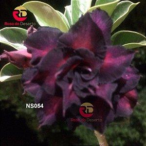 Enxerto de uma cor com flor Tripla - NS054