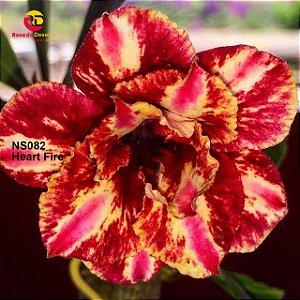 Enxerto de uma cor com flor Dobrada - NS082 (Heart Fire)