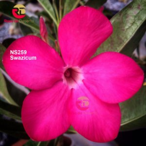Enxerto de uma cor com flor Simples - NS259 (Purple Velvet)