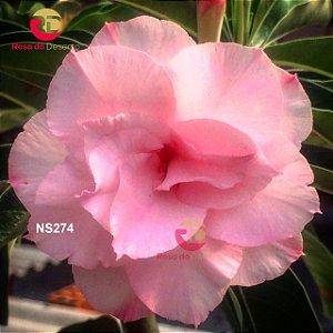Enxerto de uma cor com flor Tripla - NS274