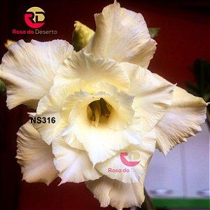 Enxerto de uma cor com flor Tripla - NS316