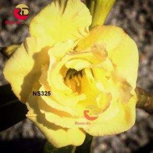 Enxerto de uma cor com flor Tripla - NS325
