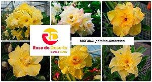MIX com 5 sementes de flores dobradas e triplas amarelas - Rinoa Chen