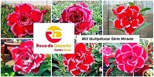 MIX com 5 sementes de flores dobradas e triplas - Série Miracle - Rinoa Chen