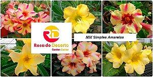 MIX com 50 sementes de flores simples amarelas - Rinoa Chen
