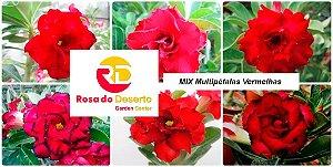 MIX com 50 sementes de flores dobradas e triplas vermelhas- Rinoa Chen