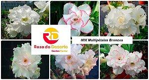 MIX com 50 sementes de flores dobradas e triplas brancas - Rinoa Chen