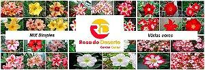 MIX com 50 sementes de flores simples varias cores - Rinoa Chen