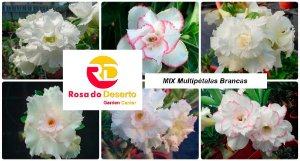 MIX com 30 sementes de flores dobradas e triplas brancas - Rinoa Chen