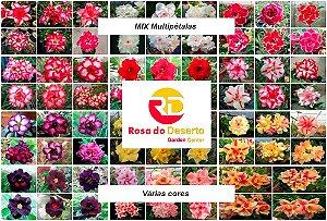 MIX com 30 sementes de flores simples, dobradas e triplas - Rinoa Chen