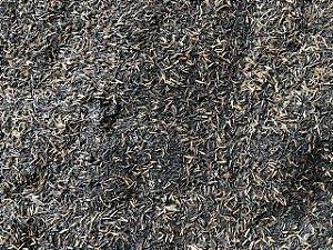 Casca de Arroz carbonizada para Rosas do Deserto - 6 Litros