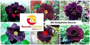 MIX com 5 sementes de flores dobradas e triplas escuras - Rinoa Chen