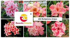 MIX com 5 sementes de flores dobradas e triplas STRIPES - Rinoa Chen