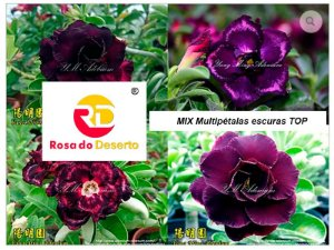 MIX com 5 sementes de flores dobradas e triplas escuras top - Yang Ming