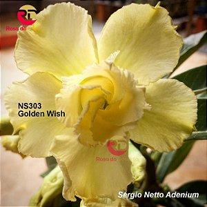 Enxerto de uma cor com flor dobrada - NS303 (Golden Wish) - Importada