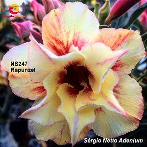 Enxerto de uma cor com flor dobrada - NS247 (Rapunzel) - Importada