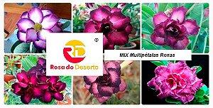 MIX com 5 sementes de flores dobradas e triplas roxa - Rinoa Chen