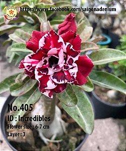 Sai Gon Adenium - MIX com 50 sementes - MIX 18